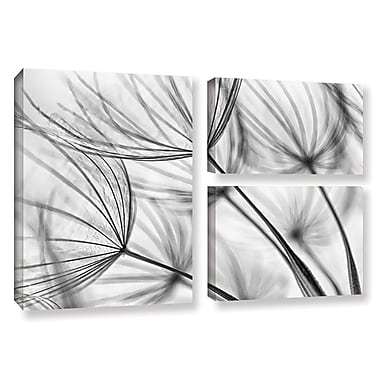 ArtWall 'Parachute Seed I' by Cora Niele 3 Piece Photographic Print on Canvas Set