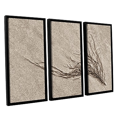 ArtWall 'Beach Find I' by Cora Niele 3 Piece Framed Graphic Art on Wrapped Canvas Set