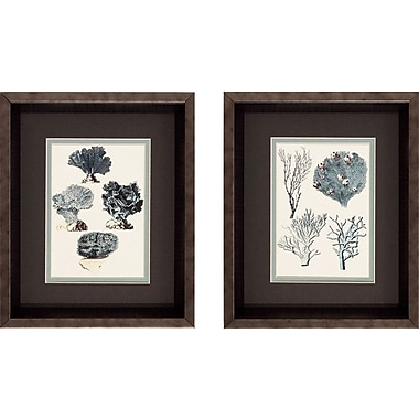 Propac Images Coral Species Framed Graphic Art Set (Set of 2)
