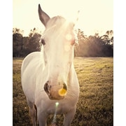 PTM Images Horse Wrapped Photographic Print on Canvas