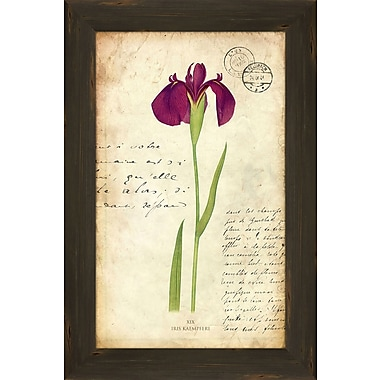 PTM Images Iris II Framed Graphic Art