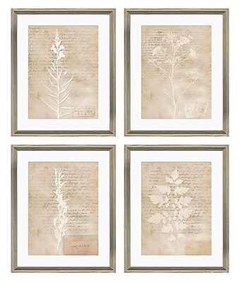 PTM Images Botanical Gicl e 4 Piece Framed Graphic Art Set