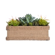 "Laura Ashley 5"" Tall Succulents in Hemp Rope Container 11.5"" x 7"" x 6.5""H (VHA102443)"