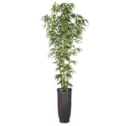 """Laura Ashley 93"""" Bamboo Tree in Natural Poles in Planter (VHX116214)"""