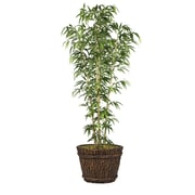 "Laura Ashley 80"" Bamboo Tree in Natural Poles in Planter (VHX116217)"