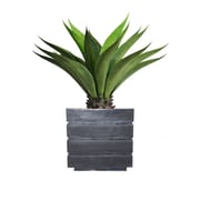 "Laura Ashley 38"" Tall Giant Aloe In Planter"