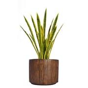 "Laura Ashley 40"" Tall Snake Plant in Planter (VHX121202)"