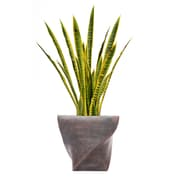 "Laura Ashley 45"" Tall Snake Plant in Planter (VHX121203)"
