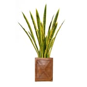 "Laura Ashley 44"" Tall Snake Plant in Planter (VHX121207)"