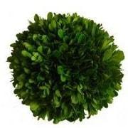 Mills Floral Boxwood Ball Desk Top Plant; 4'' H x 4'' W x 4'' D