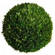 Mills Floral Boxwood Ball Desk Top Plant; 12'' H x 12'' W x 12'' D