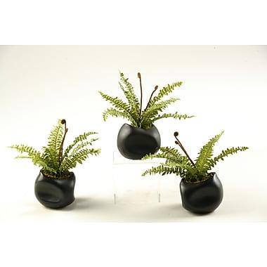 D & W Silks Mini Boston Fern Desk Top Plant in Planter (Set of 3)