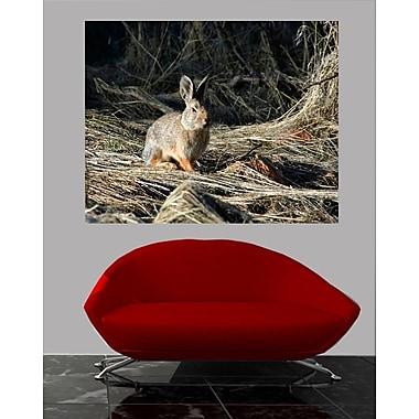 Wallhogs Batie Cottontail Wall Mural; 38.5'' H x 48'' W