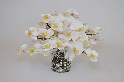 The French Bee Orchids in Ribbed Cylinder Vase WYF078278367468