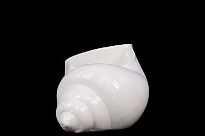Urban Trends Ceramic Conch Seashell Figurine, 7.5