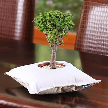 Greenbo Home and Garden Fiorina Plastic Pot Planter; White / Beige