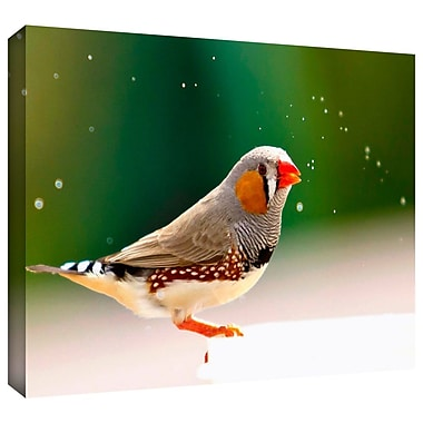 ArtWall 'Zebra Finch' by Lindsey Janich Photographic Print on Wrapped Canvas; 18'' H x 12'' W