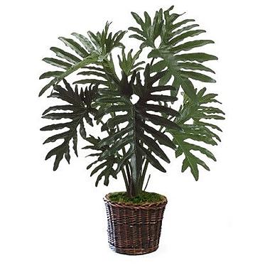 Dalmarko Designs Philodendron Floor Plant in Basket