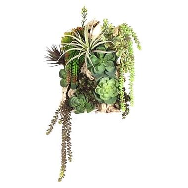 Dalmarko Designs Succulent Hanging Plant