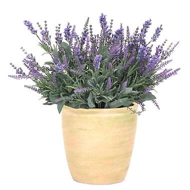 Dalmarko Designs Lavender in Planter