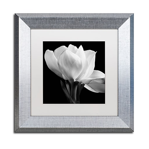 "Trademark Fine Art ''Gardenia'' by Michael Harrison 11"" x 11"" White Matted Silver Frame (ALI0287-S1111MF)"