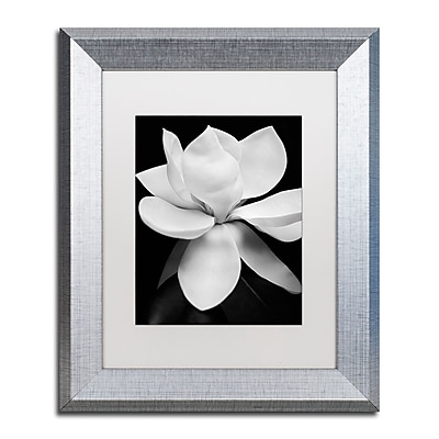 Trademark Fine Art ''Magnolia'' by Michael Harrison 11