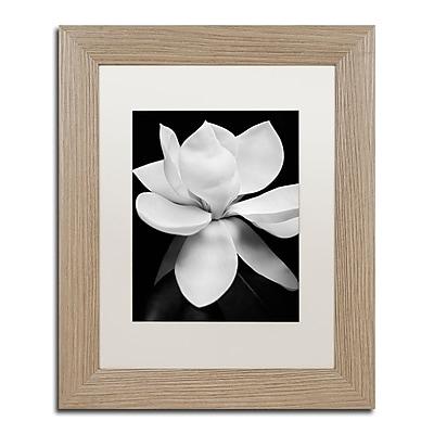 Trademark Fine Art ''Magnolia'' by Michael Harrison 11