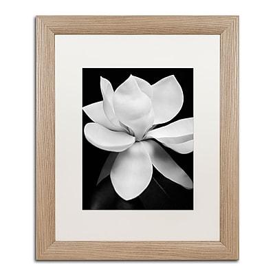 Trademark Fine Art ''Magnolia'' by Michael Harrison 16