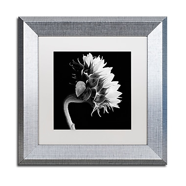 Trademark Fine Art ''Sunflower'' by Michael Harrison 11