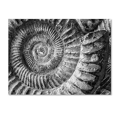 Trademark Fine Art ''Amonita 1'' by Moises Levy 18