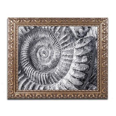 Trademark Fine Art ''Amonita 1'' by Moises Levy 16