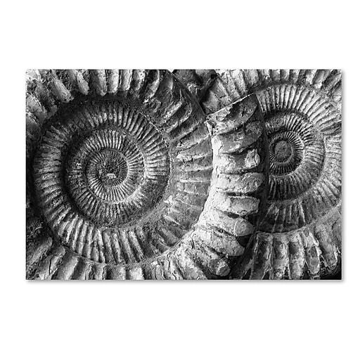 "Trademark Fine Art ''Amonita 3'' by Moises Levy 12"" x 19"" Canvas Art (ALI1052-C1219GG)"