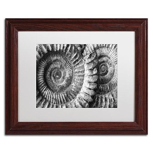 "Trademark Fine Art ''Amonita 3'' by Moises Levy 11"" x 14"" White Matted Wood Frame (ALI1052-W1114MF)"