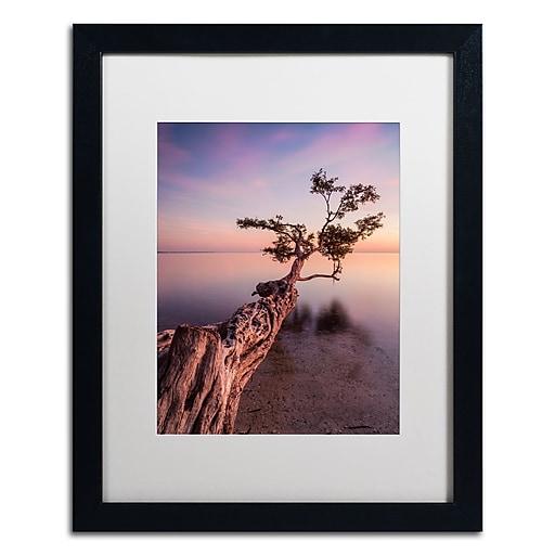 "Trademark Fine Art ''Water Tree IV'' by Moises Levy 16"" x 20"" White Matted Black Frame (ALI1066-B1620MF)"