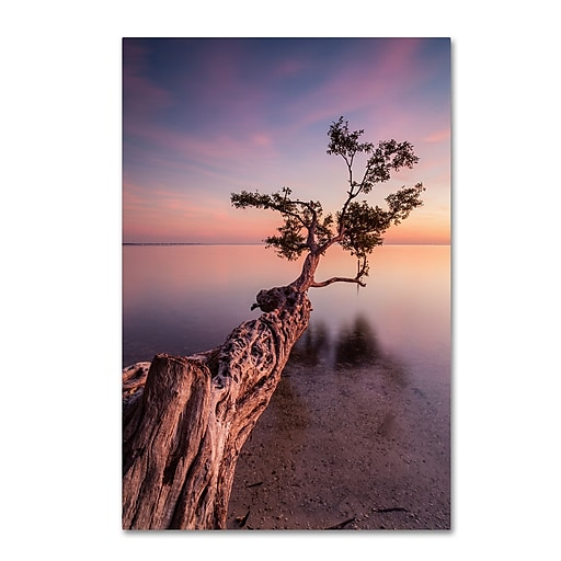 "Trademark Fine Art ''Water Tree IV'' by Moises Levy 12"" x 19"" Canvas Art (ALI1066-C1219GG)"