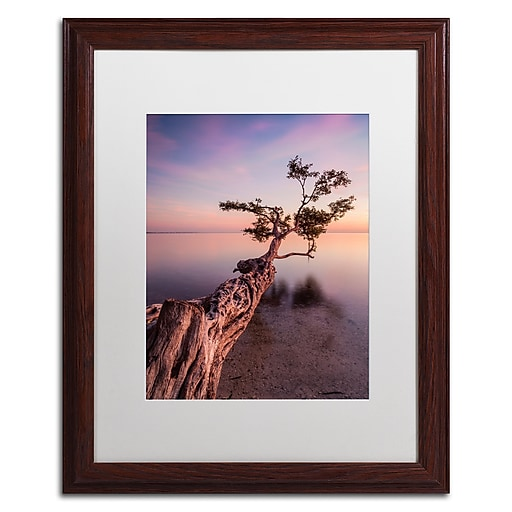 "Trademark Fine Art ''Water Tree IV'' by Moises Levy 16"" x 20"" White Matted Wood Frame (ALI1066-W1620MF)"