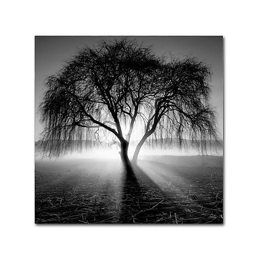 "Trademark Fine Art ''Lightning Tree I'' by Moises Levy 35"" x 35"" Canvas Art (ALI1069-C3535GG)"