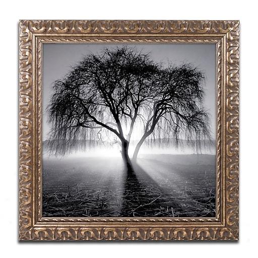 """Trademark Fine Art ''Lightning Tree I'' by Moises Levy 11"""" x 11"""" Ornate Frame (ALI1069-G1111F)"""