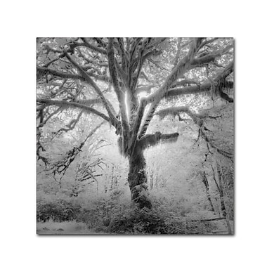 Trademark Fine Art ''Lightning Tree II'' by Moises Levy 24