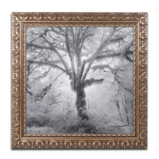 "Trademark Fine Art ''Lightning Tree II'' by Moises Levy 16"" x 16"" Ornate Frame (ALI1080-G1616F)"