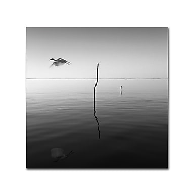 Trademark Fine Art ''Fly'' by Moises Levy 24