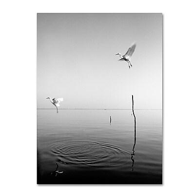 Trademark Fine Art ''Flying'' by Moises Levy 18