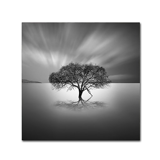 "Trademark Fine Art ''Water Tree VIII'' by Moises Levy 14"" x 14"" Canvas Art (ALI1125-C1414GG)"