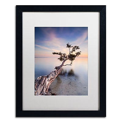 Trademark Fine Art ''Water Tree X'' by Moises Levy 16