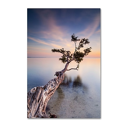 Trademark Fine Art ''Water Tree X'' by Moises Levy 22