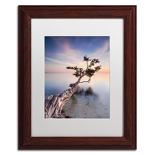 """Trademark Fine Art ''Water Tree X'' by Moises Levy 11"""" x 14"""" White Matted Wood Frame (ALI1126-W1114MF)"""