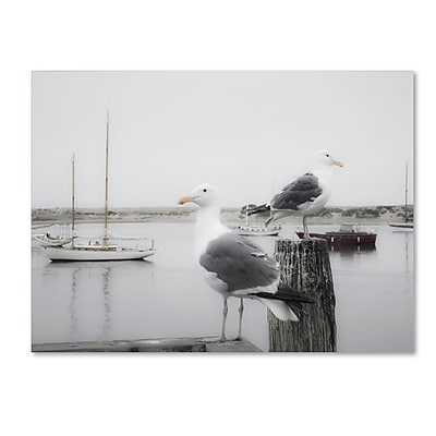 Trademark Fine Art ''Two Seagulls & Boats'' by Moises Levy 24