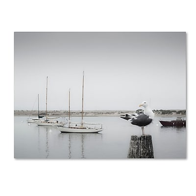 Trademark Fine Art ''Four Boats & Seagull'' by Moises Levy 35
