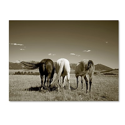 Trademark Fine Art ''Three Horses'' by Preston 18
