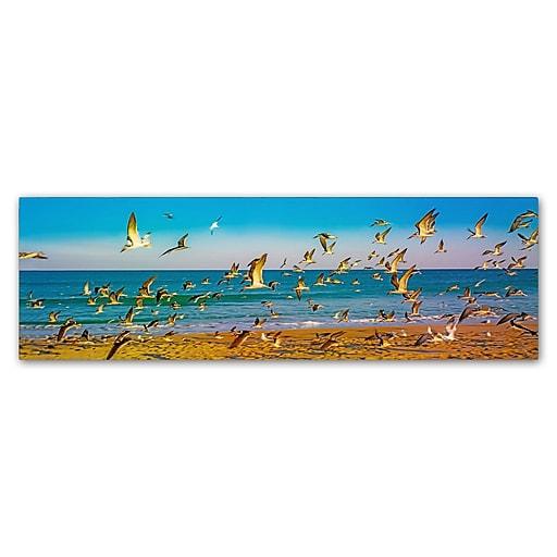 "Trademark Fine Art ''Florida Beach Birds'' by Preston 6"" x 19"" Canvas Art (EM0516-C619GG)"